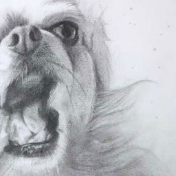 Dogs Making Stupid Faces No.1